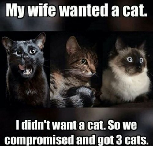 Love Wife Meme - My wife wanted a cat. I didn't want a cat. So we compromised and got 3 cats.
