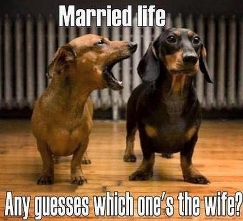 Your Wife My Wife Meme dachshund_wife_meme1 - the My wife, Your wife memes puppy mother meme #1 Happily married life. Do you have any guesses as to which of the women is the wife?
