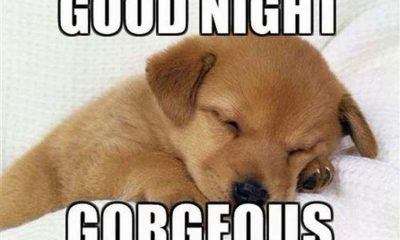 good night memes and images